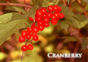 f-cranberry.jpg